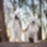 Dog Walk Dogs.jpg