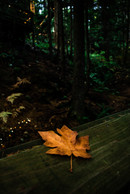 Capilano Δ Autumn.jpg