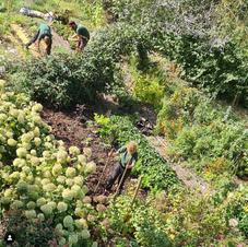 Notre équipe prépare le sol pour de nouvelles cultures potagères