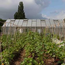 Potager Urban Farm