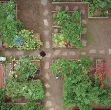 Vue aérienne d'un jardin comestible en ville qui produit 300kg/an sur 60m2 !