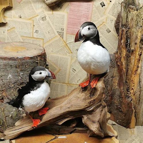 Two taxidermy puffins
