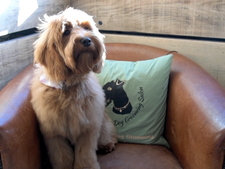 Gillsmans Dog Grooming Salon | Promo Video