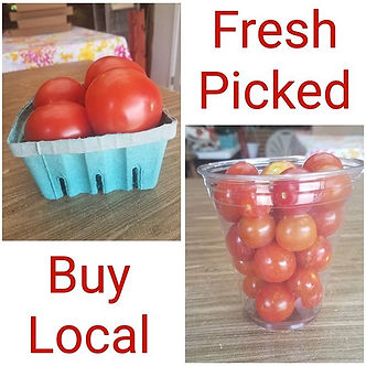 We have fresh picked tomatoes and cherry