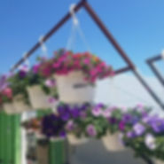 We have baskets in full bloom!!!! Be sur