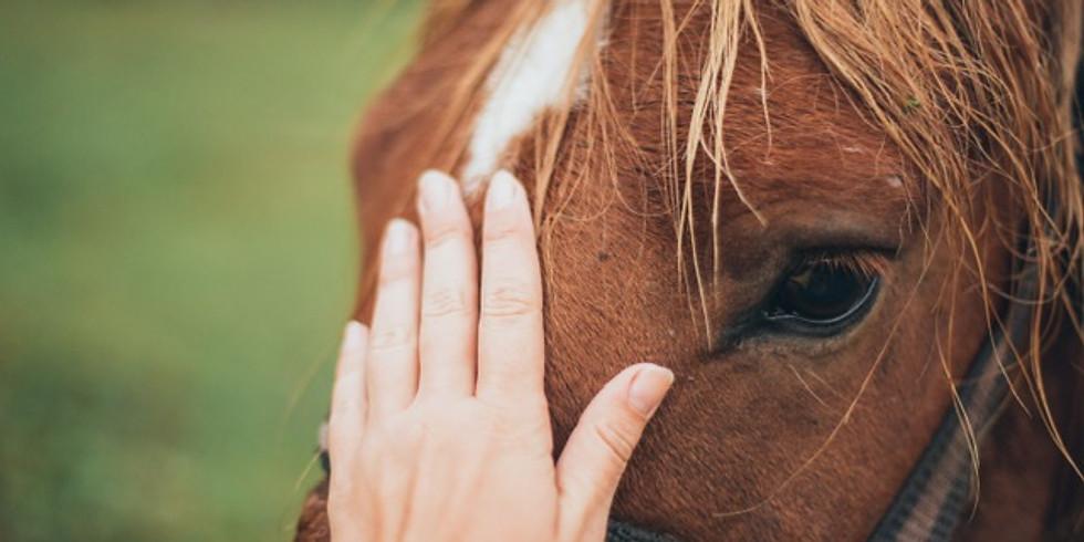 Expérimentez le cheval autrement - het paard anders ervaren