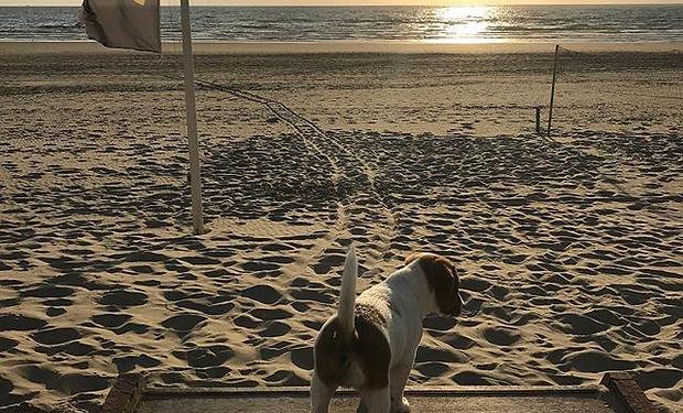 Dibbes meets Wijk aan Zee