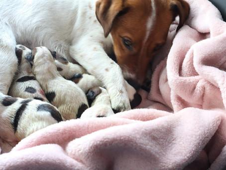 Welkom DapperRijk Pupjes!!