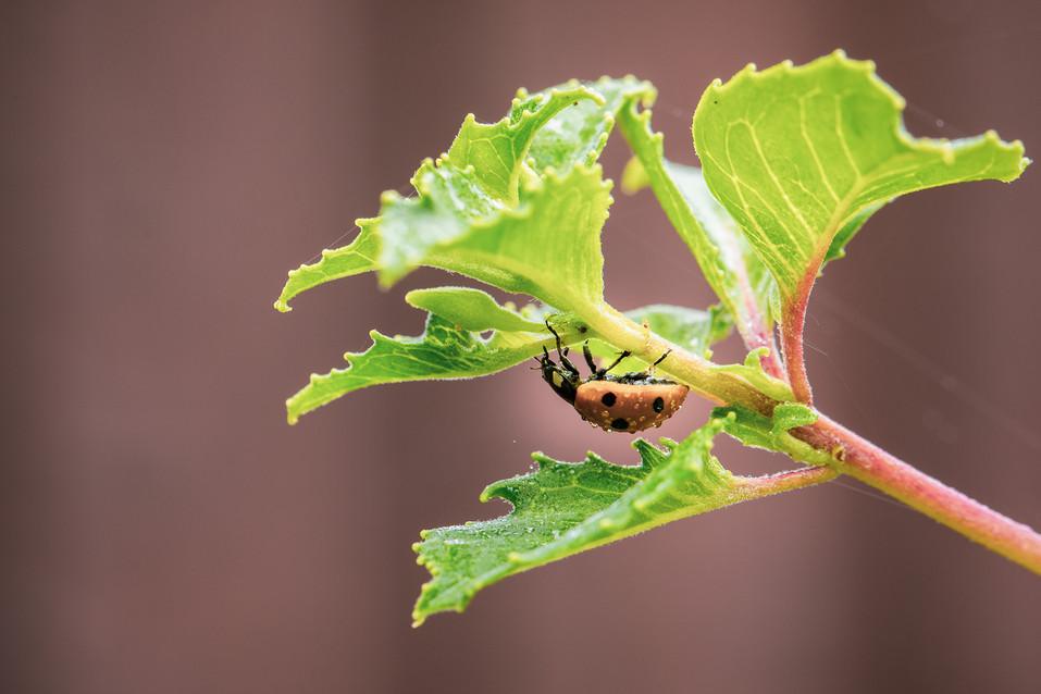 Ladybird Macro Photography
