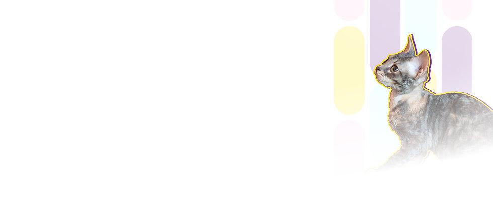 Котёнок породы уральский рекс