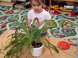 Уход ха комнатными растениями