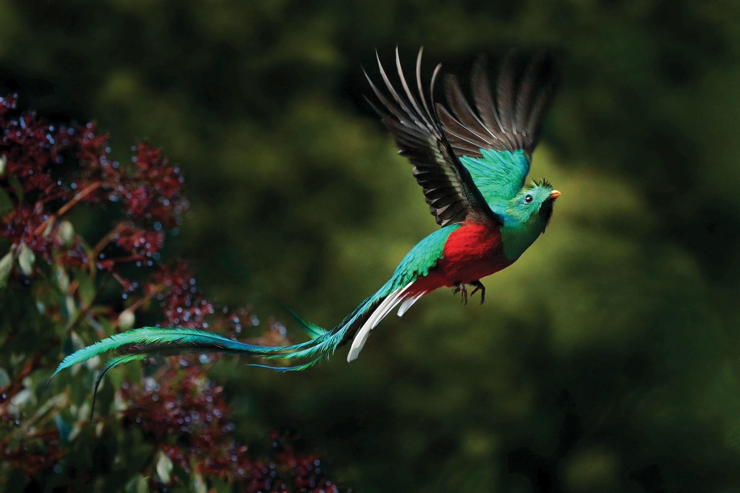 web_resplendent-quetzal_adobestock_13457