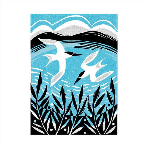 Manda Beeching Terns