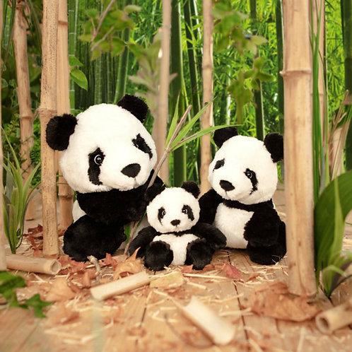 Kimi the Panda