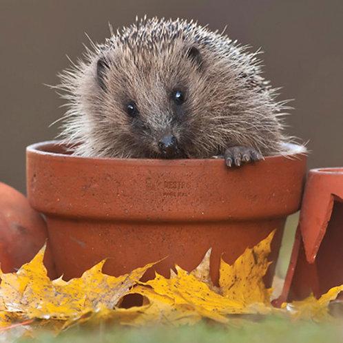 Potted Hedgehog