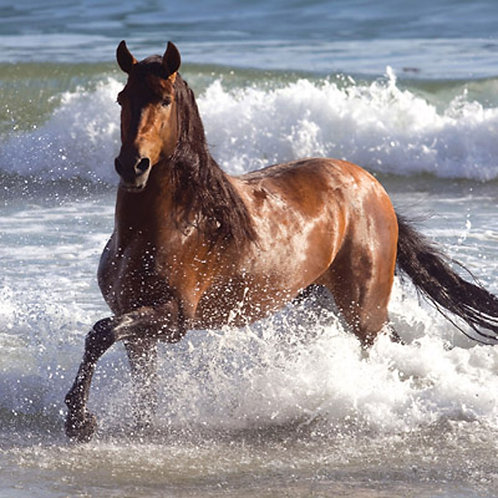 Horse In The Waves