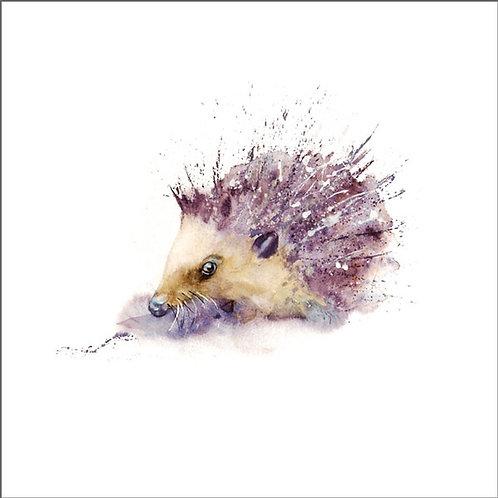 Rachel Toll Hedgehog