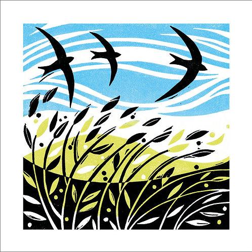 Manda Beeching Swifts
