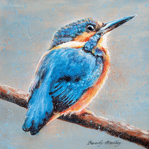 Beverly Madley Kingfisher