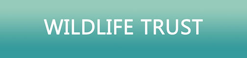 Wildlife-Trust-Header.jpg