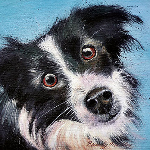 Beverly Madley Collie