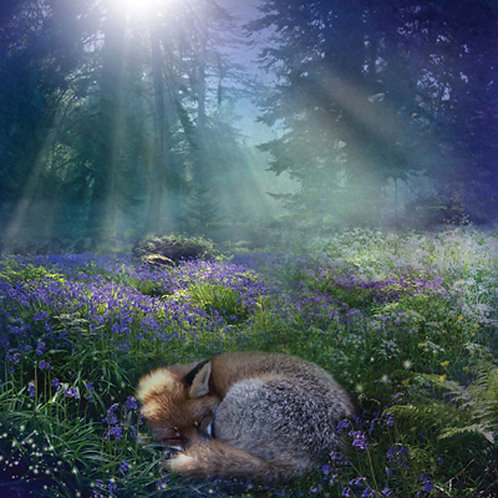 Enchanted Isle Bluebell Dawn