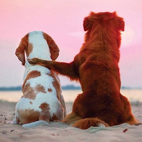 Snoopy & Kes