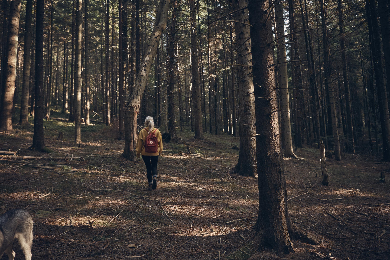 Soulful Trail Nature Healing