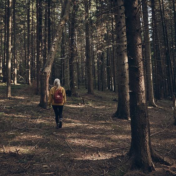 Nachhaltigkeit im Wald
