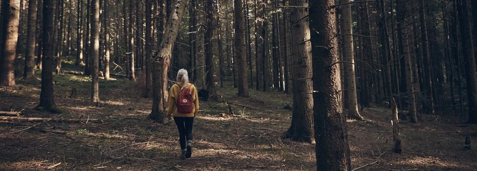 Frau, die in Wald geht