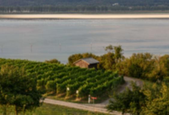 Landschaft des Kanton Thurgau / CH Sonnuntergansfotografie am Rhein