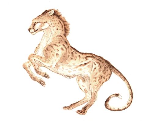 CheetaHorse.png