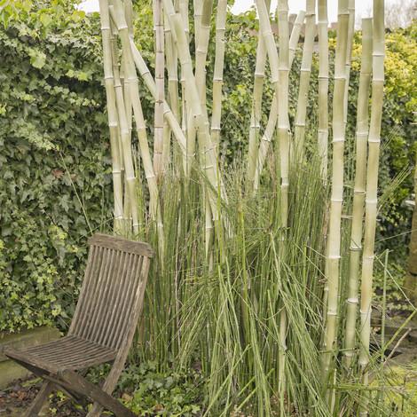 Keramische bamboe