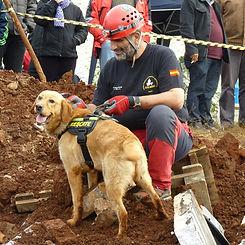 perros-terremotos-k9.jpg