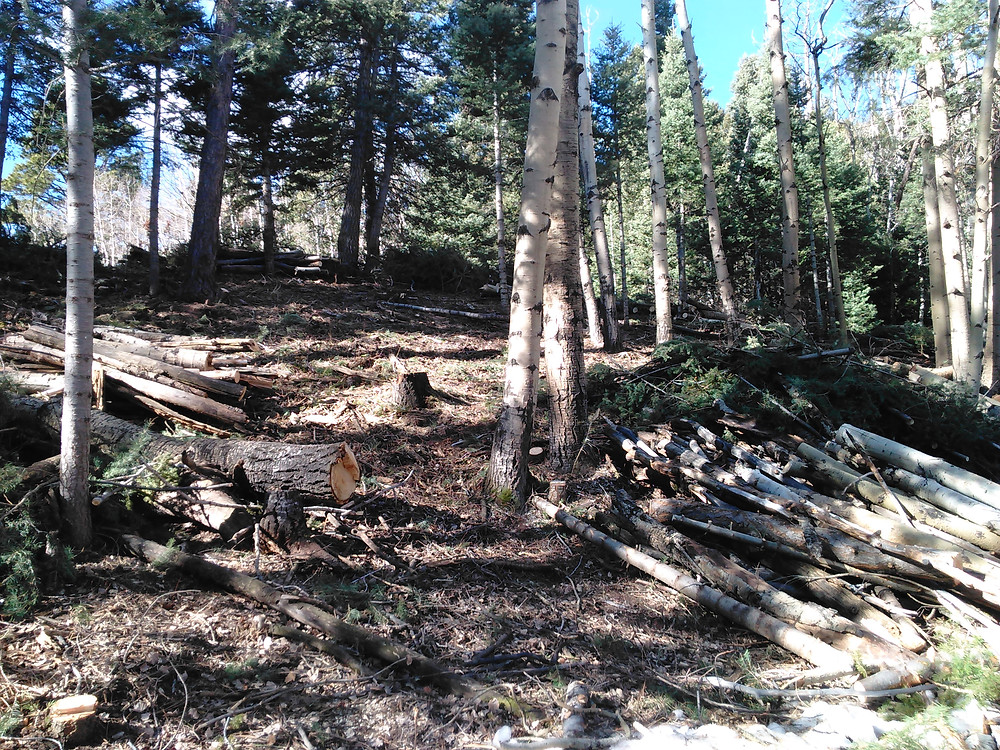 Thinning forests up by North Lake help mitigate the potential damage from wildfires.