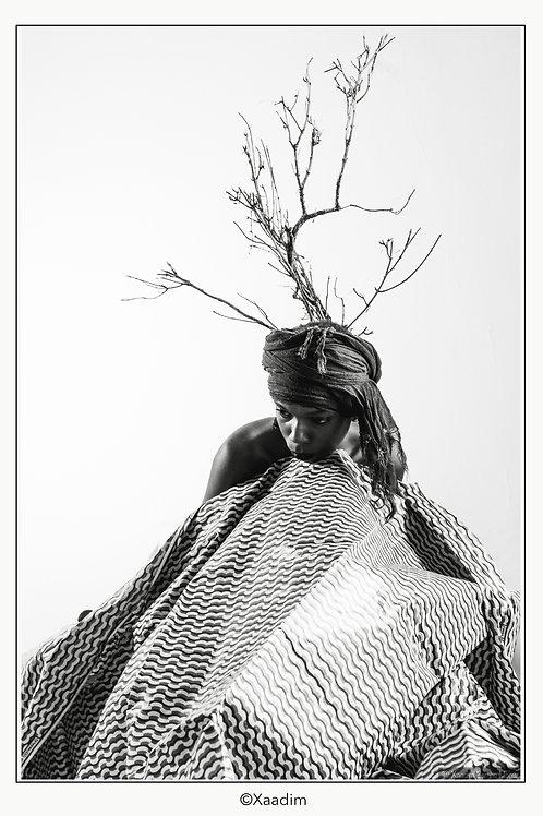Série Débbo ko Lekki #1 (Femme arbre)- XAADIM