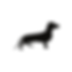 dachshund clothing