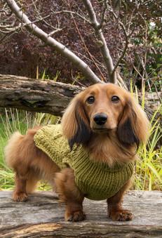Cheddar in cashmere jumper