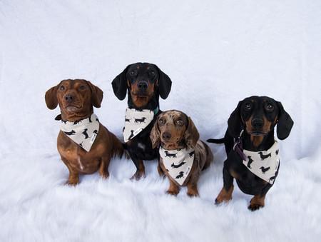 Sausage dog neckerchiefs