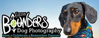 Jimmy-Bounders dog Photography