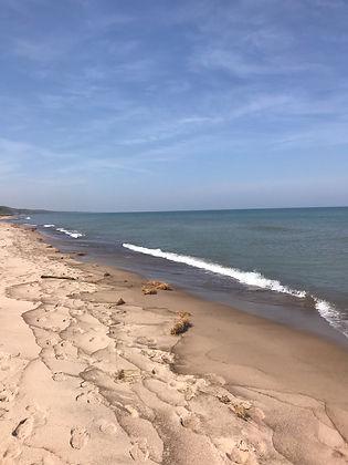 S Short beach image.jpeg