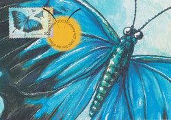 ulysess-butterfly