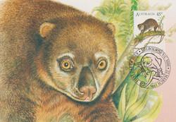Indonesian bear cuscus