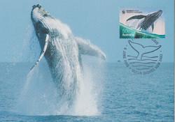 humpack whale