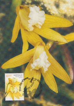 Golden rock orchid