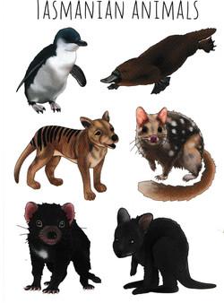 Tasmanian-Animals