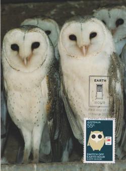 Bam-owls