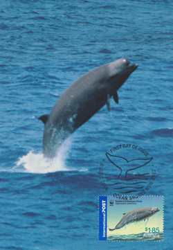 south bottlenose whale