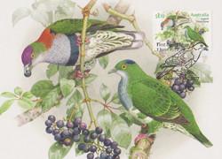 Supberb Fruit-Dove