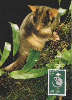 Leadbeater-possum